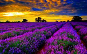 Đến đất nước Pháp khám phá vẻ đẹp hoa lệ
