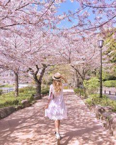 Ngắm hoa anh đào mùa xuân